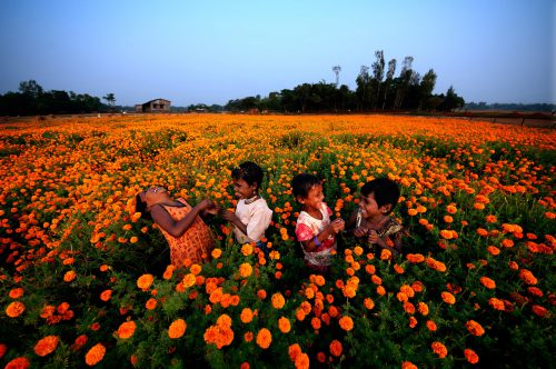 Four children play and laugh in field of golden yellow flowers.