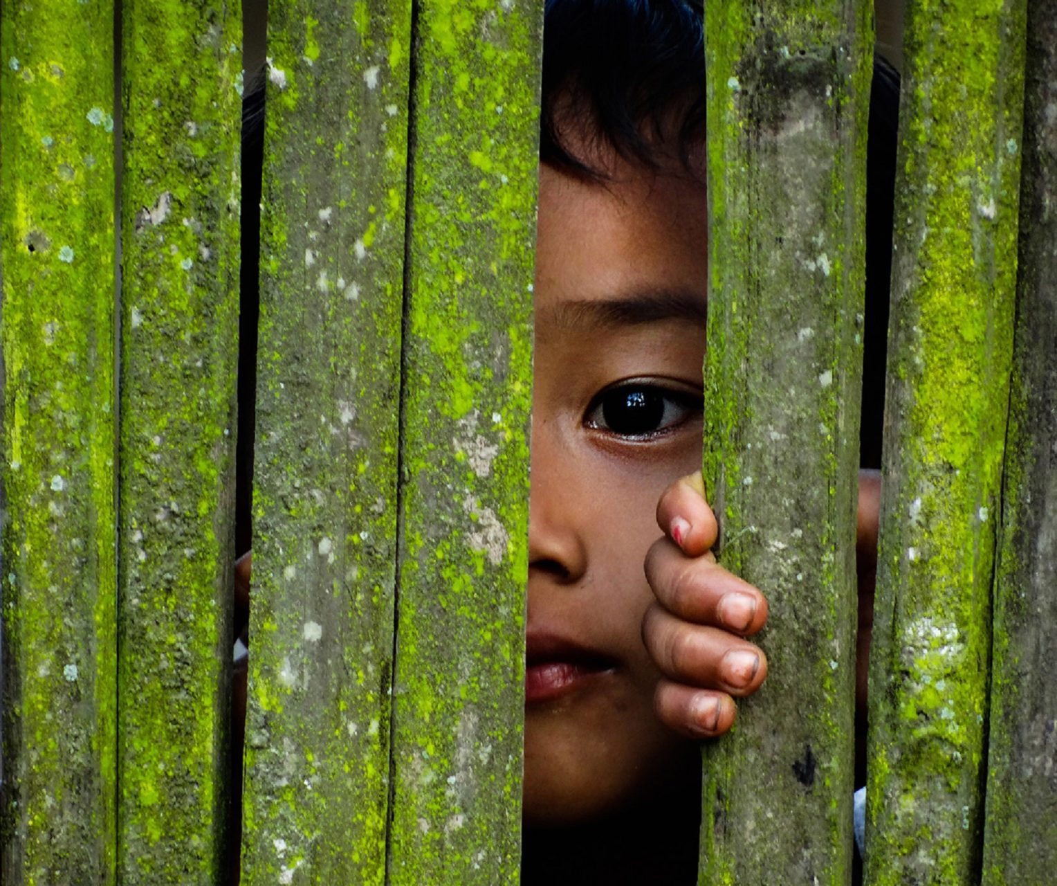 small child hiding behind green fence, with one eye peeking through
