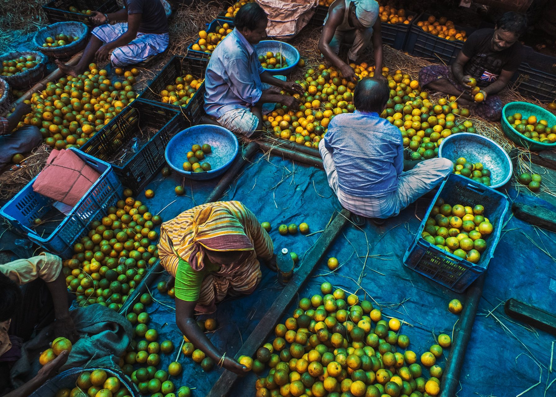 men and women collecting oranges