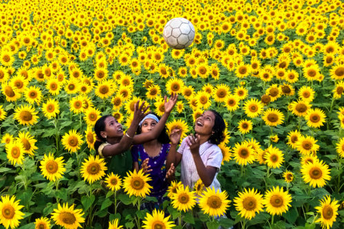 Girls play in a field of sunflowers